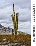 the sonora desert and san tan... | Shutterstock . vector #1123632554