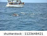 whale  dolphins watching in sri ... | Shutterstock . vector #1123648421