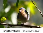 close up of the finch in front...   Shutterstock . vector #1123698569