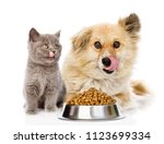 Stock photo kitten and licking lips hungry dog sitting with a empty bowl isolated on white background 1123699334