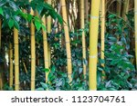 Bamboo Forest In Southern...
