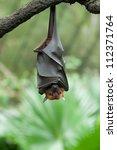 Bat Hanging On A Tree Branch...