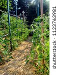 Small photo of Vegetable garden, permaculture with straws on ground, tomatoes plants on wooden stakes