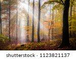 autumn forest slovakia | Shutterstock . vector #1123821137