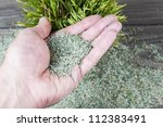 Hand Holding New Grass Seed...