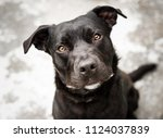 beautiful black dog outside the ... | Shutterstock . vector #1124037839