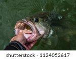 big bass largemouth   fishing | Shutterstock . vector #1124052617