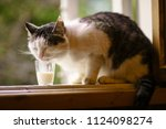 Hungry Cat Drink Milk From...