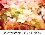 spring apple tree blossom close ... | Shutterstock . vector #1124124569