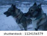 husky sledge  sweden | Shutterstock . vector #1124156579