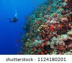 scuba diver photographer on the ... | Shutterstock . vector #1124180201