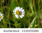 Life On A Meadow  Beetle...