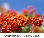 Autumn Berries On A Background...