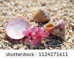 sea shells on the beach   Shutterstock . vector #1124271611