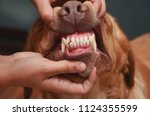 sharp teeth of a dog. the jaw... | Shutterstock . vector #1124355599