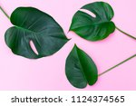 tropical leaves on a pink... | Shutterstock . vector #1124374565