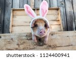 funny red pig of duroc breed... | Shutterstock . vector #1124400941