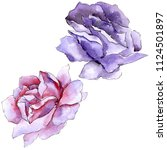 colorful rose. floral botanical ... | Shutterstock . vector #1124501897