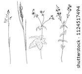vector set of ink drawing wild... | Shutterstock .eps vector #1124517494