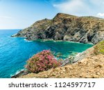 turquoise sea and pink flowers... | Shutterstock . vector #1124597717