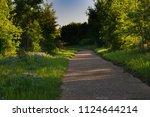 texas bluebonnet during the... | Shutterstock . vector #1124644214