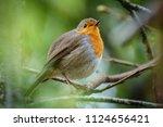 closeup of whole erithacus... | Shutterstock . vector #1124656421