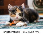Stock photo calico kitten laying on carpet with toy on string 1124685791