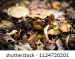 forest floor litter and fungus | Shutterstock . vector #1124720201