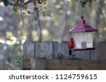 red male northern cardinal... | Shutterstock . vector #1124759615