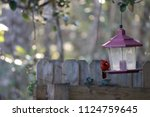 red male northern cardinal... | Shutterstock . vector #1124759645