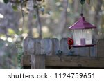 red male northern cardinal... | Shutterstock . vector #1124759651