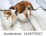 cat on the roof | Shutterstock . vector #1124773517