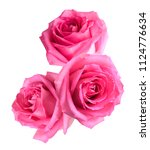 Stock photo flower of three pink rose head isolate white 1124776634