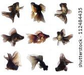 set of black  goldfish on white ... | Shutterstock . vector #112484435