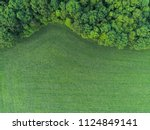 Ryegrass Field Next To Forest...