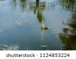 golf ball hits the water.   Shutterstock . vector #1124853224