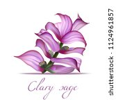 clary sage flower. realistic... | Shutterstock .eps vector #1124961857
