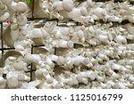 origin mushroom farm | Shutterstock . vector #1125016799