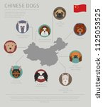dogs by country of origin.... | Shutterstock .eps vector #1125053525