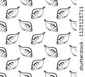 conch a marine mollusc  conch... | Shutterstock .eps vector #1125125711