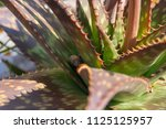 menorca island  spain | Shutterstock . vector #1125125957