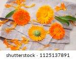 marigold or calendula flowers... | Shutterstock . vector #1125137891