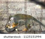 Blurred Little Monkey Eating...