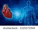 3d illustration  anatomy of... | Shutterstock . vector #1125171944
