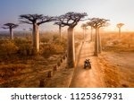 Beautiful Baobab Trees Avenue...