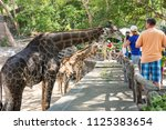 pattaya  thailand   february 01 ... | Shutterstock . vector #1125383654