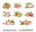 watercolor nuts isolated. hand... | Shutterstock . vector #1125390944