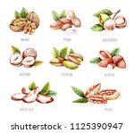 watercolor nuts isolated. hand... | Shutterstock . vector #1125390947
