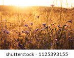 landscape with wildflowers in... | Shutterstock . vector #1125393155