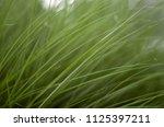 grass art background   Shutterstock . vector #1125397211
